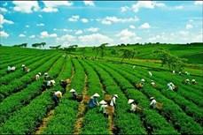 Thúc đẩy phát triển nền kinh tế xanh trong bối cảnh biến đổi khí hậu