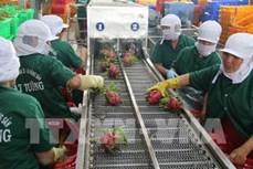 越南蔬果销往世界40个国家和地区市场