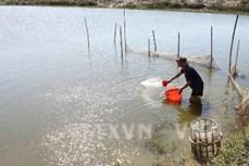 Dùng chế phẩm sinh học cho tôm - Hướng phát triển bền vững