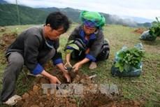Lai Châu phát triển nông nghiệp gắn với xây dựng nông thôn mới