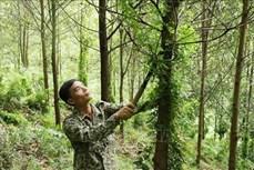 Thái Nguyên điều chỉnh rừng phòng hộ đầu nguồn ít xung yếu sang phát triển rừng sản xuất