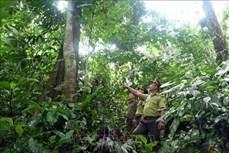 Tuyên Quang hoàn thành kế hoạch trồng rừng