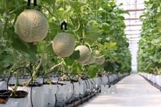 Đưa các mô hình nông nghiệp đô thị hiệu quả vào thực tiễn tại Thành phố Hồ Chí Minh