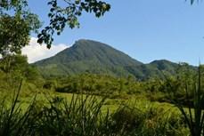 Bảo tồn rừng sinh thái tại Di sản Văn hóa thế giới Mỹ Sơn