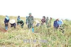 Binh đoàn 15 góp phần giảm nghèo và đảm bảo an sinh xã hội vùng dân tộc thiểu số Tây Nguyên