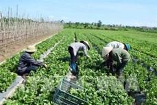 越南FLC集团与以色列企业加强农业合作