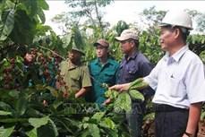 Phát triển kinh tế trang trại ở Đắk Lắk gặp nhiều khó khăn
