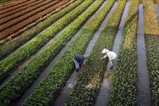 """Nghị quyết """"tam nông"""" tạo đà phát triển nền nông nghiệp hiện đại"""