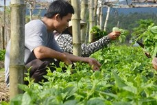 越南FLC集团拟对农业领域投资15亿美元