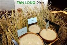Định vị giá trị và hình ảnh cho sản phẩm gạo Việt Nam