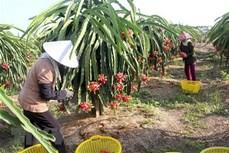 越南与新西兰为即将生效的CPTPP加强信息共享合作