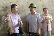Nuôi con dúi giúp người dân xã Vân Sơn giảm nghèo