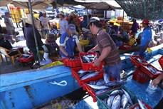 """Công bố nhãn hiệu """"Cá ngừ đại dương Bình Định"""""""