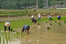 Đẩy mạnh đào tạo nghề, tạo việc làm tại chỗ cho lao động trẻ khu vực nông thôn miền núi