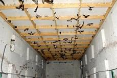 An Giang phát triển nghề nuôi chim yến bền vững