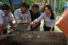 Nuôi lươn hiệu quả trên vùng ngập lũ ở Tiền Giang