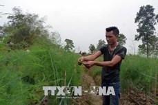 Anh Hoàng Anh Tuấn làm giàu từ trồng măng tây