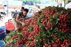 北江省注重发展主要出口产品