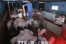 Kinh nghiệm chống nóng cho lợn