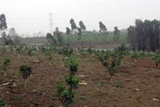 Phát triển cây ăn quả là hướng thoát nghèo bền vững ở Phú Thọ