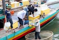 越南中部各省致力解决海洋环境污染事故 恢复灾区生产经营活动