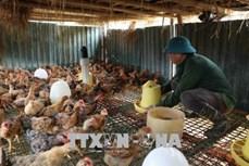Ông Lò Văn Bóng làm giàu từ mô hình trang trại chăn nuôi kết hợp