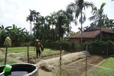 Kinh tế vườn giúp nông dân Thừa Thiên - Huế thu nhập cao và bền vững