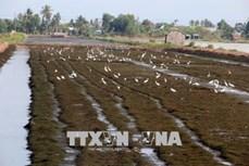 Kiên Giang chuyển đổi đất lúa kém hiệu quả sang trồng cây có giá trị cao