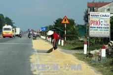 Phơi, đốt rơm rạ trên các quốc lộ: Hiểm họa khôn lường