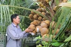 Ông Lý Văn Sáu thoát nghèo nhờ chuyển đổi sản xuất theo mô hình nông nghiệp đô thị
