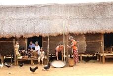 Nhà Dài cổ xưa của người Mạ ở Lâm Đồng