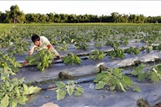 Những thách thức về nông nghiệp sạch - Bài 2