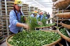 今年前8月茶叶出口成下降趋势