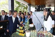Thủ tướng Nguyễn Xuân Phúc: Bảo hộ giá trị thương hiệu sâm Ngọc Linh như thương hiệu quốc gia Việt Nam