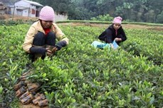Phú Thọ phát triển kinh tế đồi rừng là ngành chủ lực
