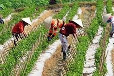 Ngành nông nghiệp tập trung tái cơ cấu gắn với đổi mới mô hình tăng trưởng trong năm 2019