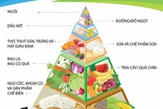 Chế độ ăn uống, hoạt động hợp lý là nền tảng của sức khỏe