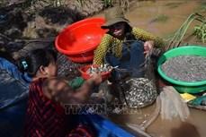 Một ngày mùa nước nổi của ngư dân Đồng Tháp