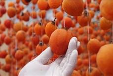 Lâm Đồng: Hồi sinh nghề sấy gió quả hồng