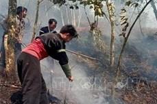 Huyện vùng cao Trạm Tấu chủ động phòng chống cháy rừng mùa khô hanh