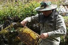 Làm giàu từ nuôi ong bạc hà