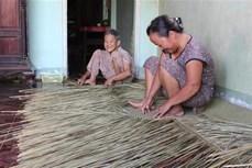 Giữ nghề đan bao đệm bàng ở Đức Huệ