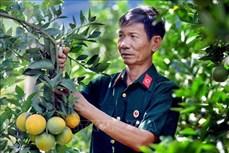 Ông Hoàng Văn Chất làm giàu nhờ chuyển đổi cơ cấu cây trồng, vật nuôi
