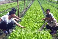 Nông nghiệp Tây Nguyên thích ứng với biến đổi khí hậu