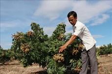 Nông nghiệp Tây Nguyên thích ứng với biến đổi khí hậu (Bài 3)