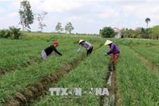 Đổi thay ở các phum, sóc vùng đồng bào dân tộc Khmer ở Sóc Trăng