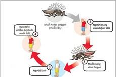 Kon Tum: Tăng cường giám sát bệnh sốt xuất huyết Dengue