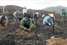 Yên Bái rà soát và giao chỉ tiêu trồng rừng cho từng địa phương