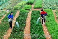 Quy định về bảo tồn nguồn gen giống cây trồng
