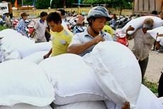 Hỗ trợ bổ sung gạo cho đồng bào dân tộc tham gia chăm sóc, bảo vệ rừng tỉnh Nghệ An